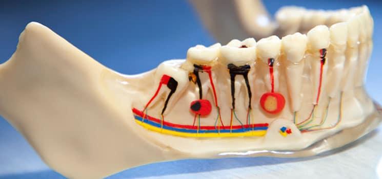 Dentisterie générale 6
