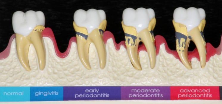 Dentisterie générale 7